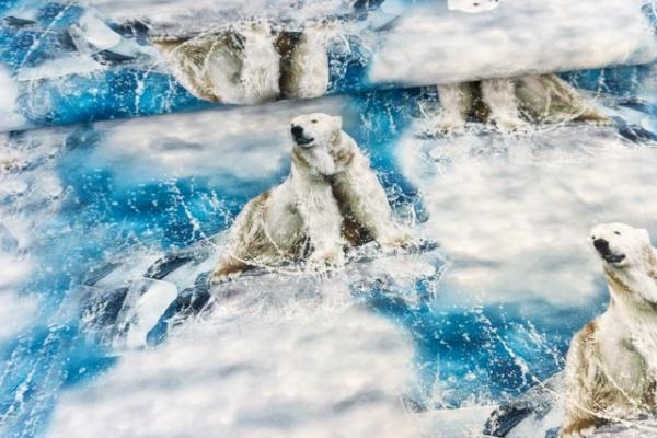Baumwolljersey Digital Eisbär Ökotex 100